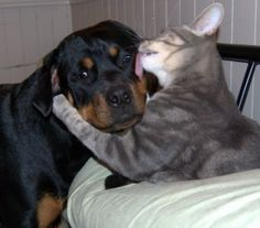 I lick u..now u r mine now 4 ever..u can't leave me. we r glued my by kissy lick 2 your face.. tat just great kitty