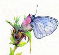 Original Watercolour painting  Butterfly on Rose by patriciastudio, $50.00