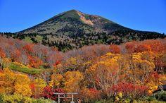 Aomori pref. 背景は八甲田の最高峰大岳です。山を帯状に飾るかのような紅葉がきれいでした。薬師神社の鳥居と人物はもっと取り込まねばなりませんが、手前のアスファルトの道路を外したのでこのようになってしまいました。もっと近寄ると山が紅葉に隠れるので妥協しました。これは苦しい言い訳です。。