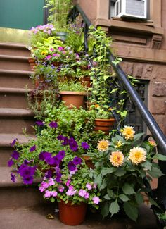 Idea for my front steps.  Do possible with herbs to keep bunnies out.