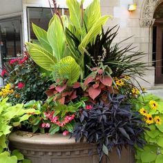 Sublime 21 Flowering Container Garden Plants for Sunny Spots https://fancydecors.co/2018/03/13/21-flowering-container-garden-plants-for-sunny-spots/ Deadhead if the plants begin to appear untidy and they'll re-bloom within an about a week. So, choose a location where it is sheltered from wind, #ContainerGarden