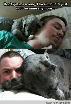 Sleeping with my dog is not the same anymore - Funny Picture