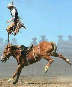 My favorite sport Saddle Bronc Ridding, and Iv rode a ton of them. I always remember every morning. Talk about Cowboy having to cowboy Up! Rodeo Cowboys, Real Cowboys, Cowboy Up, Cowboy Humor, Rodeo Rider, Bull Riders, Ranch Life, Le Far West, Western Art