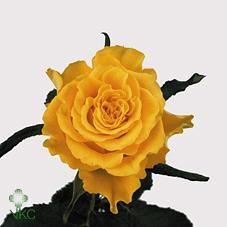 rose white naomi picture - Google zoeken   Rozen   Pinterest
