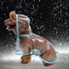 Waterproof Transparent Dog Raincoat - Free Shipping