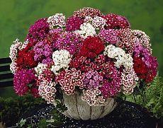 живые цветы живые обои на рабочий стол
