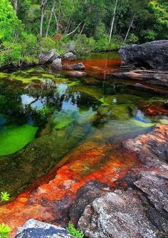 Caño Cristales – Amazing Rainbow River In Colombia