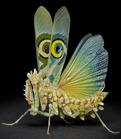 A flower praying mantis: a species of praying mantis that mimic flowers.Their coloration is an example of aggressive mimicry, a form of camouflage in which a predator's colours and patterns lure prey