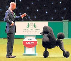 Trade Stands Crufts 2015 : Best crufts images dogs of the world journaling file