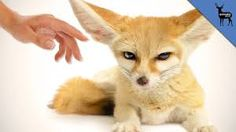 Image result for exotic pets