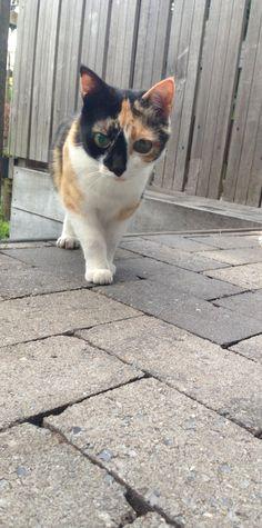 Dit is onze poes Minoes zij is de moeder van onze kat Wout