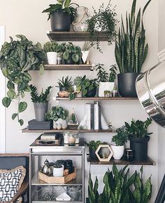 8 Simple and Stylish Tips: Plants Decor Cups artificial plants indoor herbs garden.Artificial Flowers Look Real artificial plants living room floral arrangements. Plant Decor, Plant Wall, Decor, Room With Plants, Cheap Decor, Garden Decor, Modern Boho Living Room, Plant Shelves, Boho Living Room