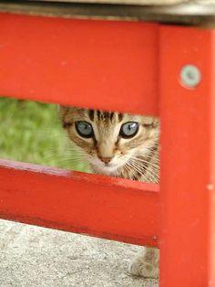 Kitty behind Orange fence