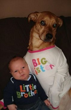 big sister dog and little brother baby