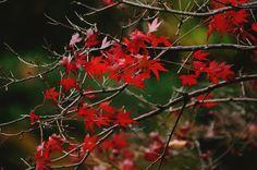 Autumn  Red Beautiful  Green  Leaf  Shadow  Light