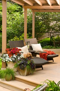 Red, white and awesome for summer container gardening chic