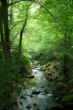 You will find a peaceful place in the Smoky Mountains