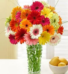Happy Gerbera Daisies, 12-24 Stems- assorted Gerbera daisies, accented with fresh bear grass. $39.99- $66.99