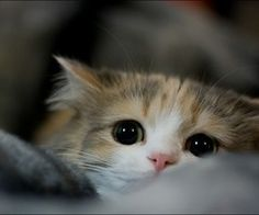 oh my god, i can't stand it... #cute #kitten
