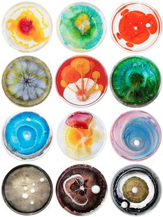 San Francisco based artist Klari Reis uses layers of reflective epoxy polymer to create colorful and abstract paintings that look like living microorganisms within the confines of plexiglass petri dishes for a project called The Daily Dish. Bio Art, Macro Fotografie, Vitrine Design, Biology Art, Petri Dish, Gcse Art, Science Art, Grafik Design, Abstract Art