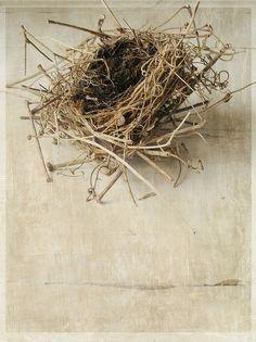 nest art