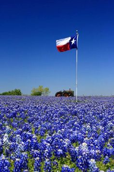 Texas Bluebonnets...Texas Flag