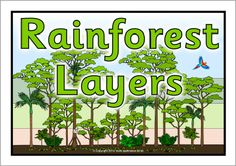 The Layers of the Rainforest/Rainforest Layers posters (SB10833) - SparkleBox