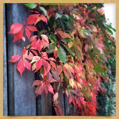 Mooie herfst tinten van bladeren