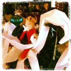 Elfie tp'd the Christmas Tree!