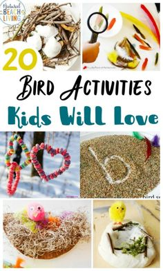 Here You'll find The Best Bird Activities for Preschoolers, All the best ideas for a Preschool Bird Theme with Lesson Plans, Hands on activities, Homemade Bird Feeders and Bird Science Activities for Preschoolers, Bird Crafts and Bird Activities for kids Bird Crafts Preschool, Preschool Science Activities, Preschool Lesson Plans, Nature Activities, Preschool Themes, Spring Activities, Preschool Activities, Crafts For Kids, Preschool Winter