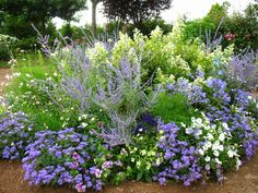 Heliotrope, butterfly bush, white flowering tobacco, petunia