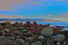 Red Rocks Seal Colony - Owhiro Bay. Wellington New Zealand by Steve Attwood, via Flickr