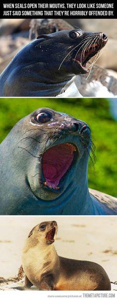 When seals open their mouths…