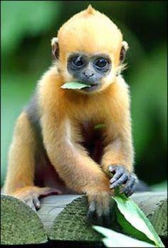 Cute+Monkeys | Cute Monkey Cartoons Cartoon Tattoo