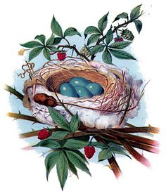 Instant Art Printable - Gorgeous Nest with Blue Eggs - The Graphics Fairy