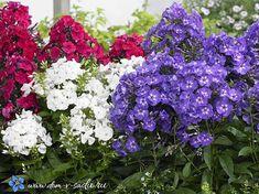 C ними любой тенистый уголок становится красивым. Garden Design, Hardscape, Plants, Shade Garden, Growing, Japanese Garden, Flowers, Landscape, Garden Plants