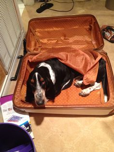 I fit! Can I come with?