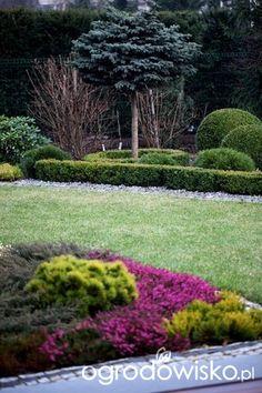 Ogród Dominiki - strona 447 - Forum ogrodnicze - Ogrodowisko