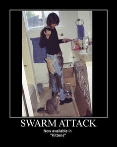Swarm Attack posted by Welknair Dnd Funny, Hilarious, Puppies And Kitties, Kittens, Geek Meme, Dungeon Master's Guide, Dungeons And Dragons Memes, Dragon Memes, Gamer Humor