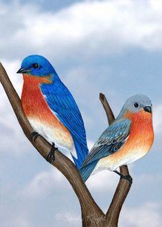 Eastern bluebirds a 5X7 digital print by Sarah Knight | SunshineSight - Print on ArtFire