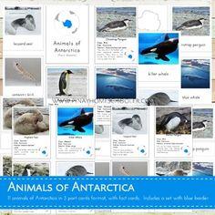 Montessori Animals of Antarctica