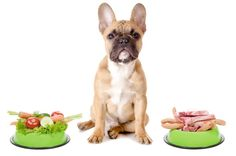 We've seen the lists of foods that are toxic to dogs, but here are a few that are okay.