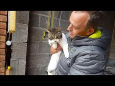 Cat Rescued from Wall - Neatorama