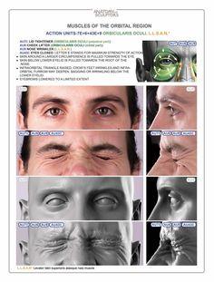 Anatomy Next store - HEAD & NECK ANATOMY + EBOOK (DELIVERY DECEMBER 2016)…