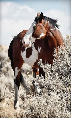 Painted Horse Print By Athena Mckinzie