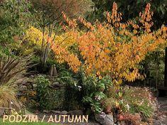 vilín na podzim