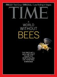 TIME Cover - A world without bees