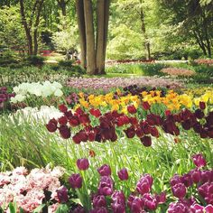 #keukenhof Gardens@ beautiful colourscreative minds amazing creation with nature!!! by heenazala