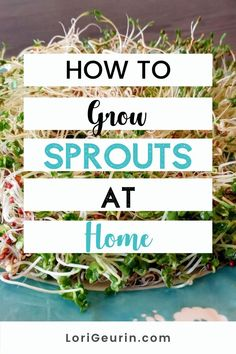 Learn how to grow sprouts from home in this quick and easy tutorial and video. Sprouts are fun and easy to grow and so nutritious to eat. You can grow broccoli, mung bean, alfalfa, and other types of sprouts using trays or Mason jars.    #howtogrowsprouts #sprouts #broccolisprouts #growsproutsindoors #growsproutsinatray #microgreens Alfalfa Seed, Alfalfa Sprouts, Broccoli Sprouts, Growing Sprouts, Good Sources Of Calcium, Female Hormones, Mung Bean, Sprout Recipes