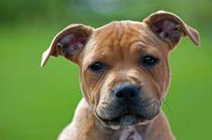 Ayuda la Asociación SOS PITBULL a luchar por los perros maltratados. Quieren construir su propio refugio para que puedan vivir en las condiciones que merecen y así rehabilitarlos. Vuestra colaboración es muy importante, vota por ellos y recibirán 7 euros por tu voto: http://www.nuez.es/proyecto-social/refugio-sos-pitbull.html